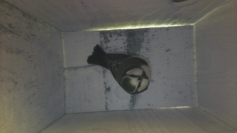 Un premier visiteur dans notre nichoir
