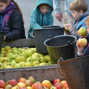 La journée de la pomme