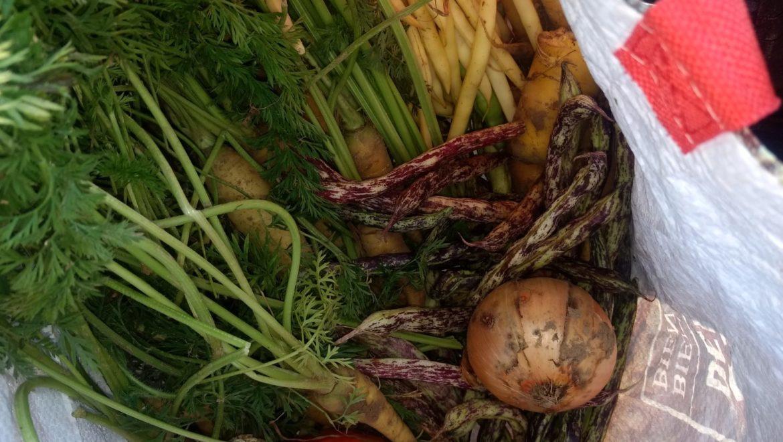 Première récolte de notre potager